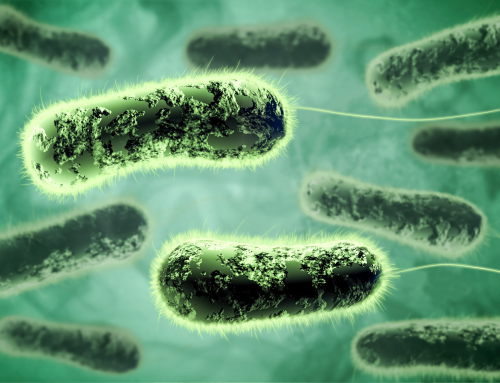 Microbial Top Facts: Pseudomonas aeruginosa