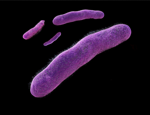 Microbial Top Facts: Shigella