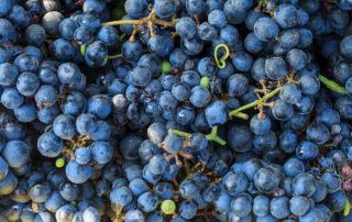 Wine terroir