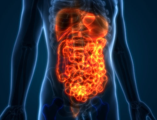 Our Helpful Gut Bacteria